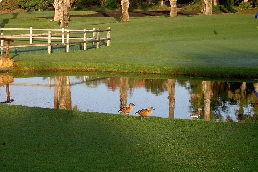 Golf Las Americas Tenerife 2